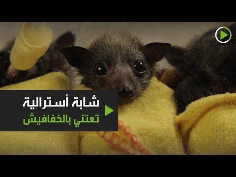 شابة أسترالية تعتني بالخفافيش وتثير الجدل