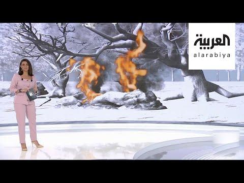 غازات الأشجار المحترقة تهدد الحياة على الأرض