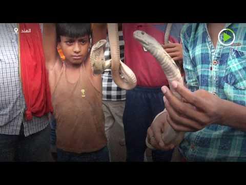 الأفاعي تُزين طقوس ناج بانتشامي الهندوسية في الهند