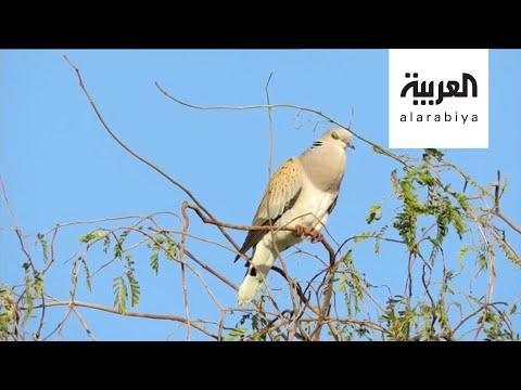 شاهد سعودي يوثّق طيور المملكة المهاجرة في كتاب مجاني