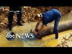 اليمن اليوم- شاهد عملية إنقاذ أشرس سلحفاة مائية