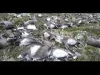 اليمن اليوم- شاهد البرق يقتل 300 حيوان رنة في النرويج