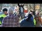 شاهد إنقاذ حصانين من بحيرة متجمدة في بنسلفانيا
